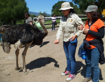 A visit at the Ostrich Farm